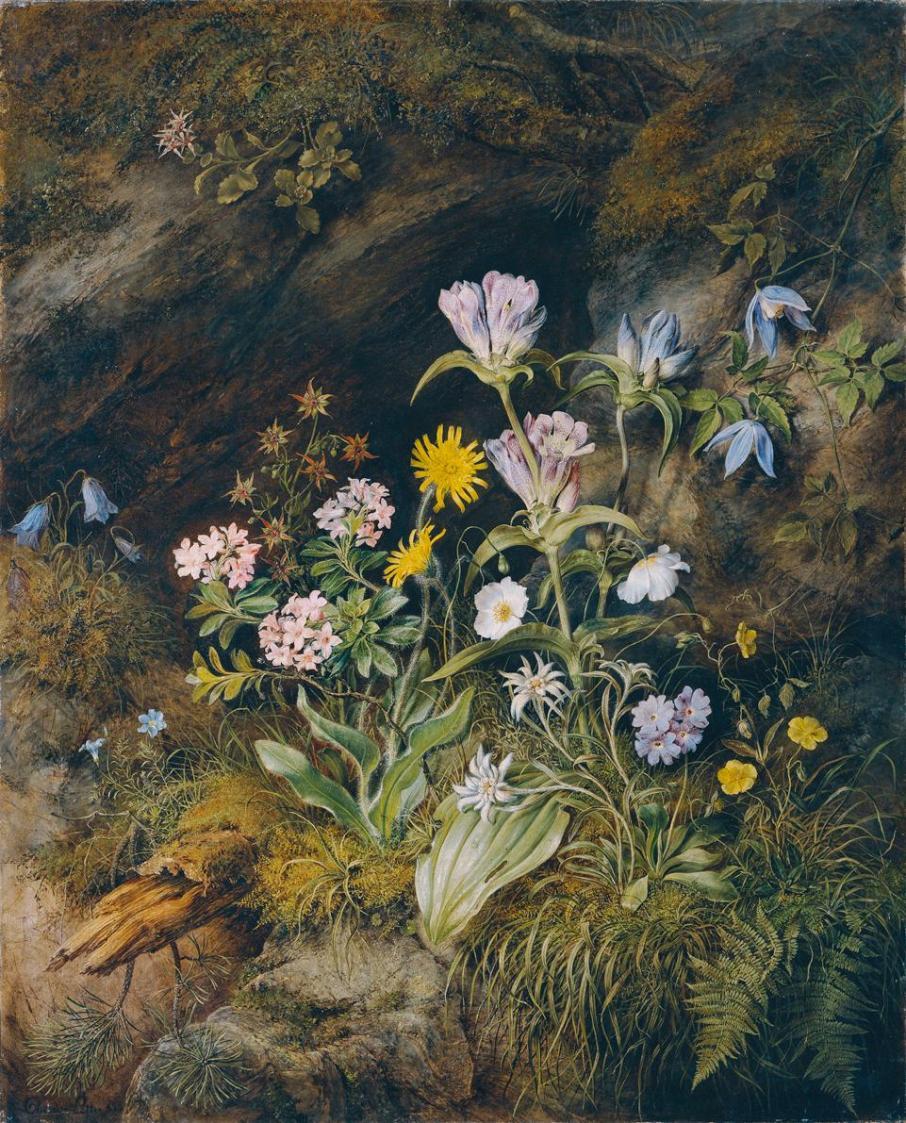 Alpine Flora von Theodor Josef Petter